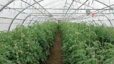 العراق يشارك في دورة خاصة عن الزراعة المستدامة في الأردن