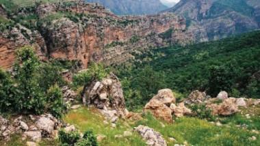 نساء كردستان يجمعن الاعشاب الطبيعية من الجبال