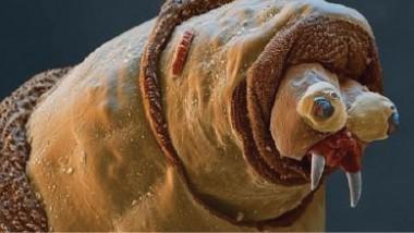 علماء: اكتشاف 18 ألف نوع من الكائنات الحية في 2014