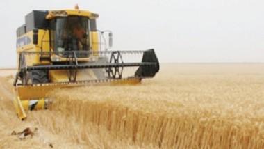 تسويق 400 ألف طن من محصول الحنطة في واسط