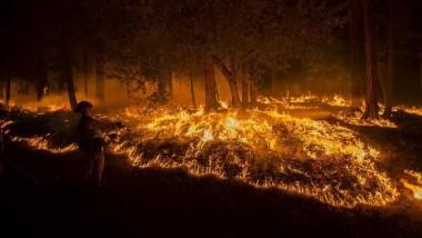 ملايين الأشجار تموت في كاليفورنيا بسبب الجفاف