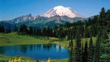 الغابات والتشجير ودورها في الحفاظ على البيئة والصحة