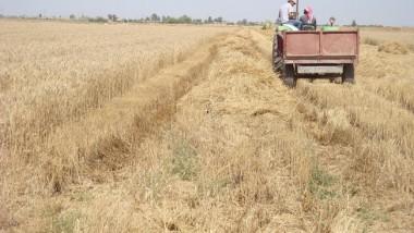 واسط تجهز مزارعيها  ببذور الحنطة والشعير