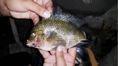 ديالى.. صيادون يعثرون على أسماك يُعتقد أنها «فتّاكة»