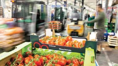 16 مليار دولار صادرات روسيا الزراعية في 2015