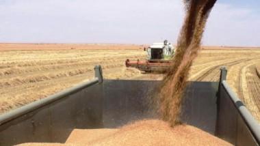 «التجارة« تواصل مناقلة الحنطة المحليّة إلى مخازنها في المحافظات