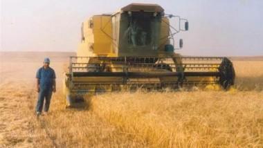 مجلس واسط يتوقع إنتاج مليون طن من محصولي الحنطة والشعير