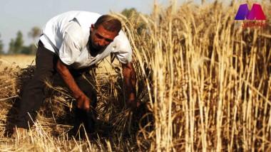 الزراعة النيابية تطالب الحكومة بصرف مستحقات الفلاحين