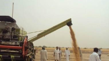 التجارة تتسلم اول دفعة من الحنطة المسوقة من الفلاحين والمزارعين