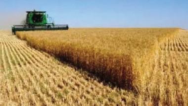 التجارة تعلن عن انطلاق الموسم التسويقي لمحصول الحنطة للعام الحالي
