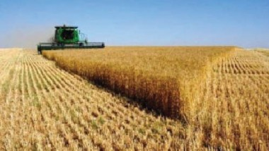 التجارة تعتمد أسعار شراء الحنطة المحلية حسب درجة تسويقها