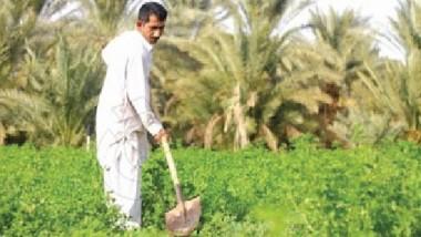 الزراعة تطلق مستحقات الفلاحين من منتجي بذور الرتب العليا
