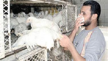 العراق سيعلن رسمياً أنه خالٍ من مرض إنفلونزا الطيور
