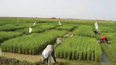 الزراعة تسعى إلى حماية إنتاجها من الخضروات في خططها وقراراتها