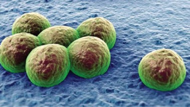 تعهد دولي بالقضاء على الجراثيم المقاومة للمضادات الحيوية