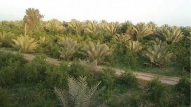 الصحة والبيئة تدعو للحد من تجريف البساتين الزراعية في ديالى