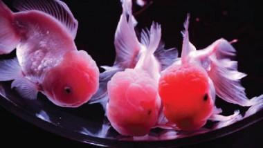 متنزه ياباني يقوم بتجميد آلاف الأسماك على حلبة تزلج