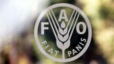 الفاو تتوقع تباطؤ الطلب العالمي على المنتجات الغذائية