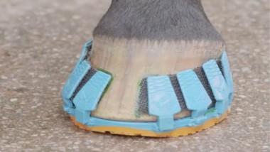 أول حذاء رياضي للأحصنة