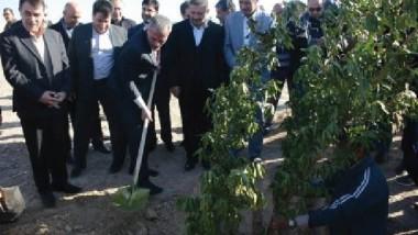 واسط تباشر بتنفيذ مشروع تشجير طريق سيد الشهداء (مهران – الكوت )