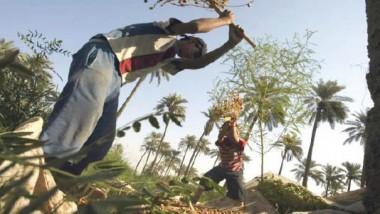 تمليك الأراضي الزراعية مشروط باستثمارها لـ 5 سنوات