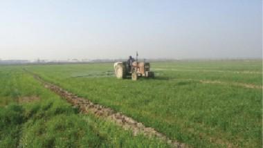 «الزراعة» تدعو إلى جذب المستثمرين في القطاع