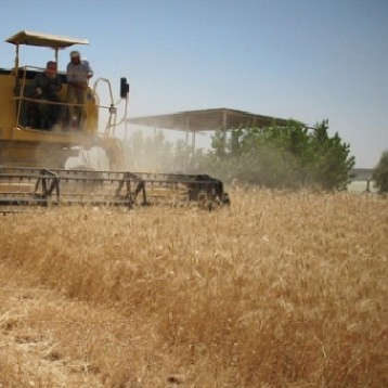 التجارة تحدد خطوات تسلّم الحنطة في السايلوات والمواقع التسويقية