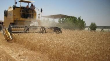 «التخطيط»: توقعات بانخفاض إنتاج الحنطة بنسبة 7.3 %