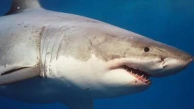 أستراليا تحذّر من أسماك القرش في الشوارع