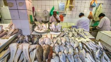 أسماك «الصبور» المهاجرة تنشّط الصيد البحري في المياه العراقية