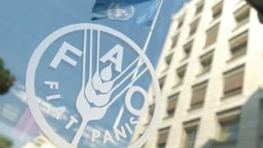 «فاو»: معايير جديدة لحماية المنتجات الزراعية