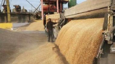 مراكز التسويق تواصل تسلمها لمحاصيل الحنطة للموسم الحالي