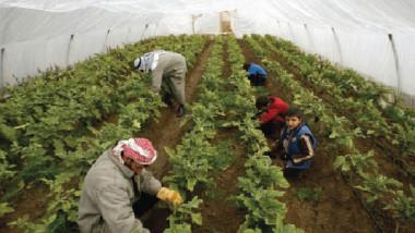 الرقابة المالية: الضعف في «سياسة الوزارة» وراء تلكؤ المشاريع الزراعية