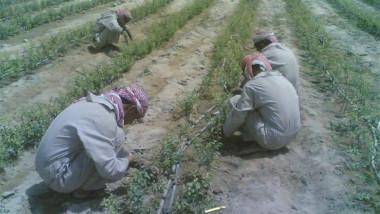 الزراعة النيابية: 30 % من فلاحي ديالى هجروا أراضيهم
