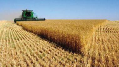 خطط لتحقيق الاكتفاء الذاتي من محاصيل زراعية ستراتيجية
