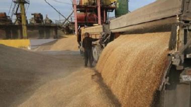 مصر تشتري 360 ألف طن من القمح الروسي والروماني