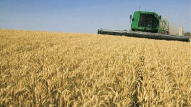 انخفاض إنتاج الحنطة والشعير لموسم 2017