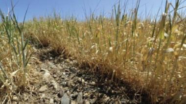 الجفاف يدمّر المحاصيل في جنوب أوروبا في واحدة من أسوأ موجاته
