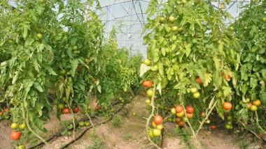 قريبا .. الزراعة تطلق قروض مبادرتها البالغة 198 مليار دينار