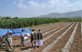 اليمن: 36 مليون دولار من البنك الدولي لدعم الزراعة