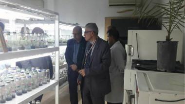 مركز أبحاث جامعة البصرة يضطلع بواقع إكثار النخيل نسيجياً