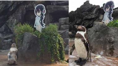 """بعد قصة حب مستحيلة اليابان تودّع """"البطريق العاشق"""""""