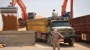 التجارة تواصل مناقلة الحنطة المحلية الى بغداد والبصرة وذي قار