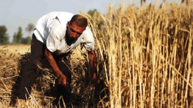 الزراعة تتجه صوب تحقيق الاكتفاء الذاتي من الحبوب