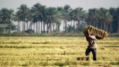 حصاد العراق الاقتصادي في 2017