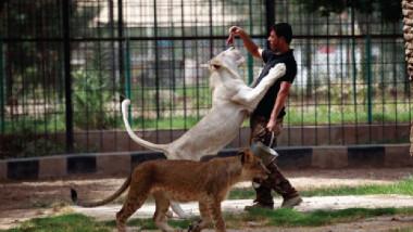 دعوات لوسائل الإعلام للاطمئنان على حيوانات حديقة الزوراء