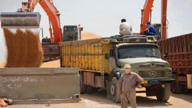 التجارة تستنفر أسطولها لمناقلة الحنطة المحلية بين المحافظات
