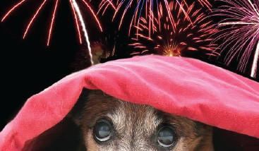 الألعاب النارية تضر بصحة الحيوانات