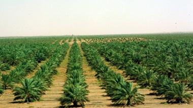 الرقعة الزراعية تتقلص والحل بالقوانين