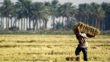 الواقع الزراعي في العراق.. مشكلات وحلول